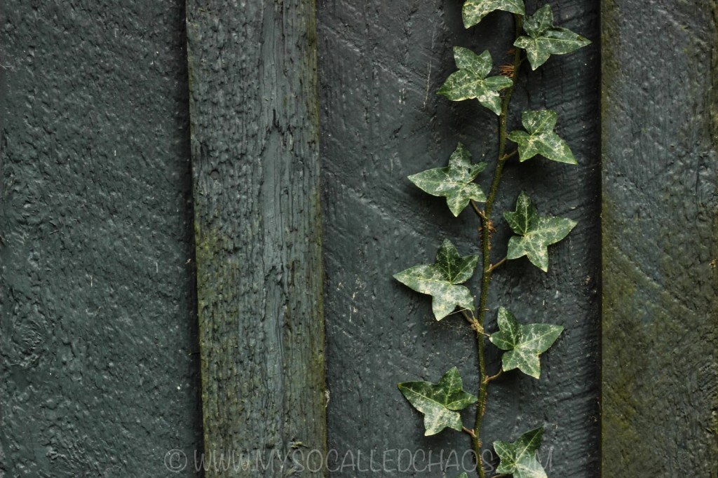 Ivy on the Wall in Coos Bay, OR