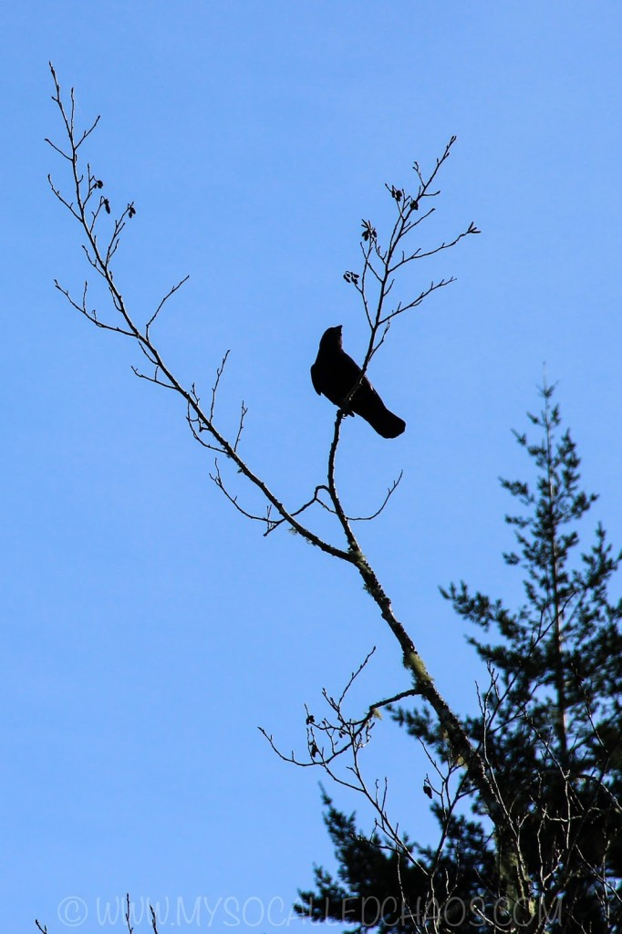 Bird Silhouette at Eel Lake, OR
