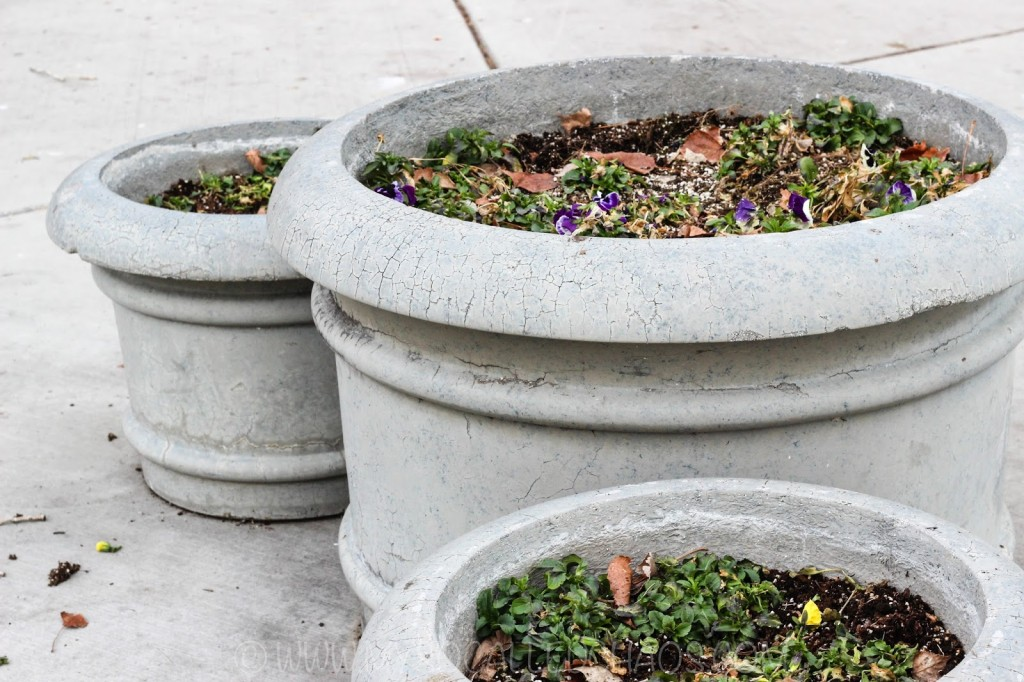 Cement planters with flowers at Liberty Park in Salt Lake City, UT