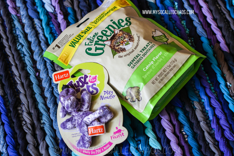 Review: Greenies Dental Treats from Chewy.com