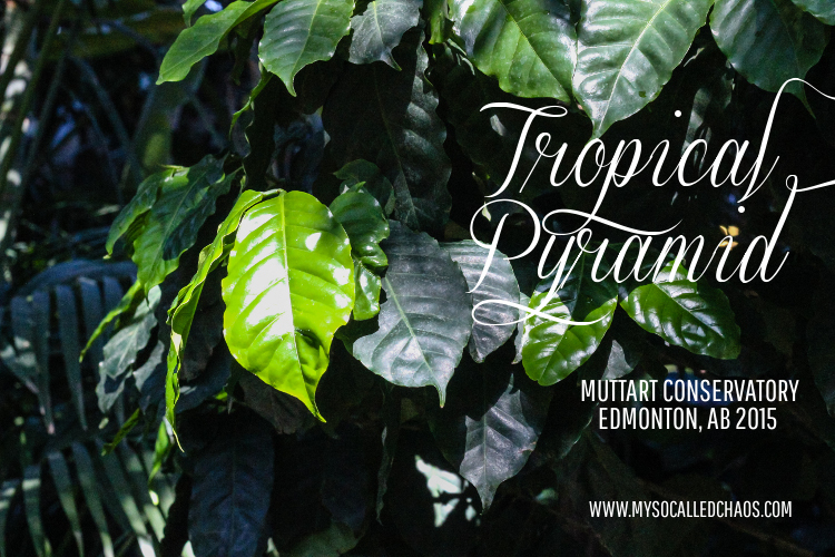 Photography: Muttart Conservatory Tropical Pyramid-Edmonton, AB