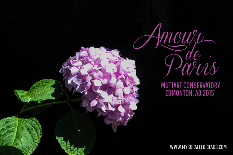 Photography: Muttart Conservatory Amour de Paris Pyramid-Edmonton, AB