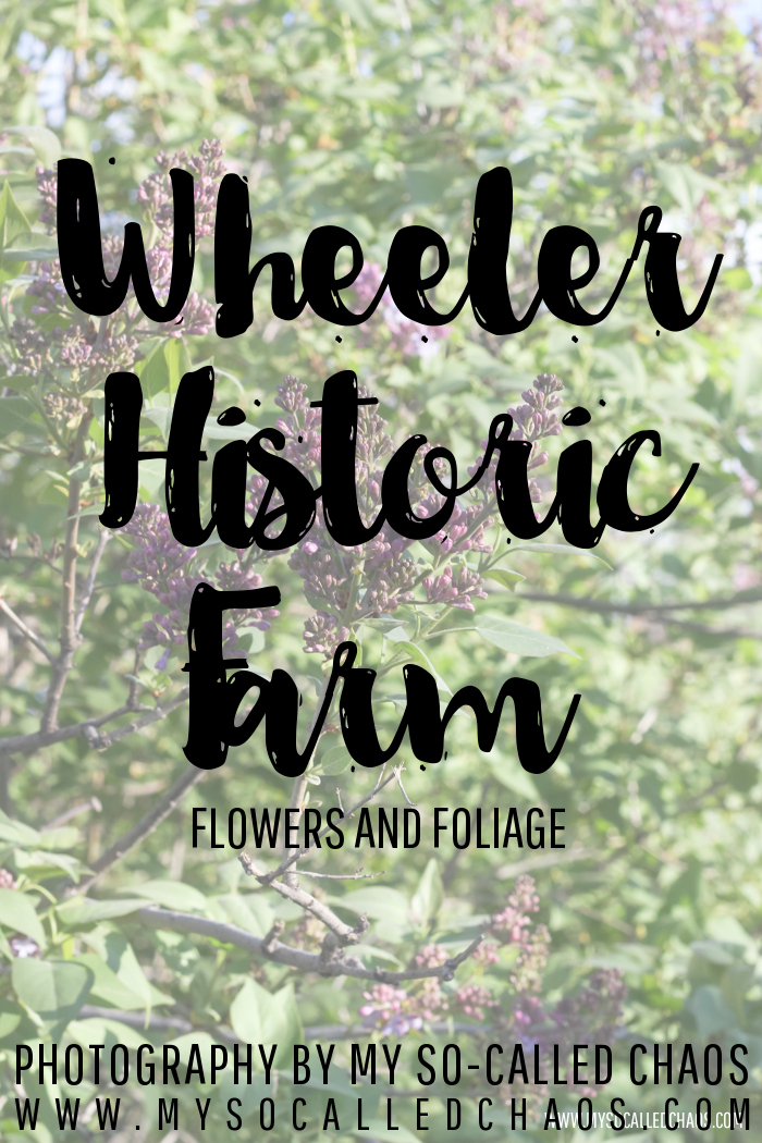 Flowers and Foliage at Wheeler Historic Farm