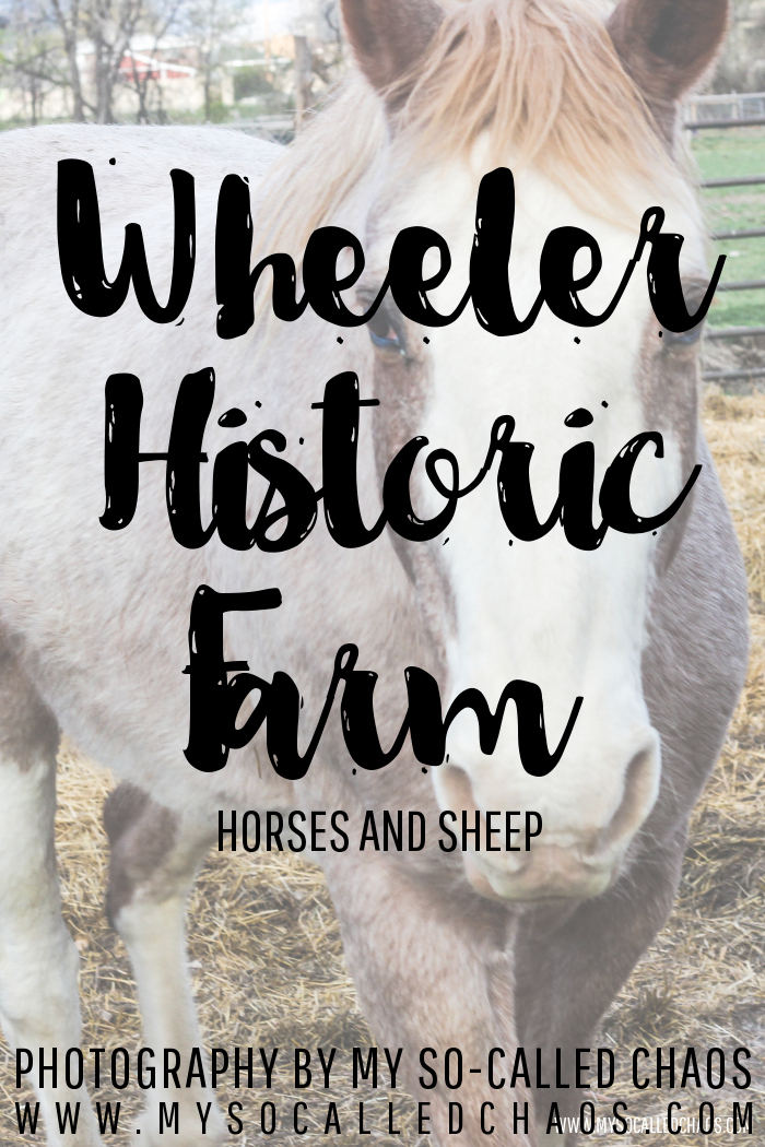 Horses and Sheep at Wheeler Historic Farm in SLC, UT