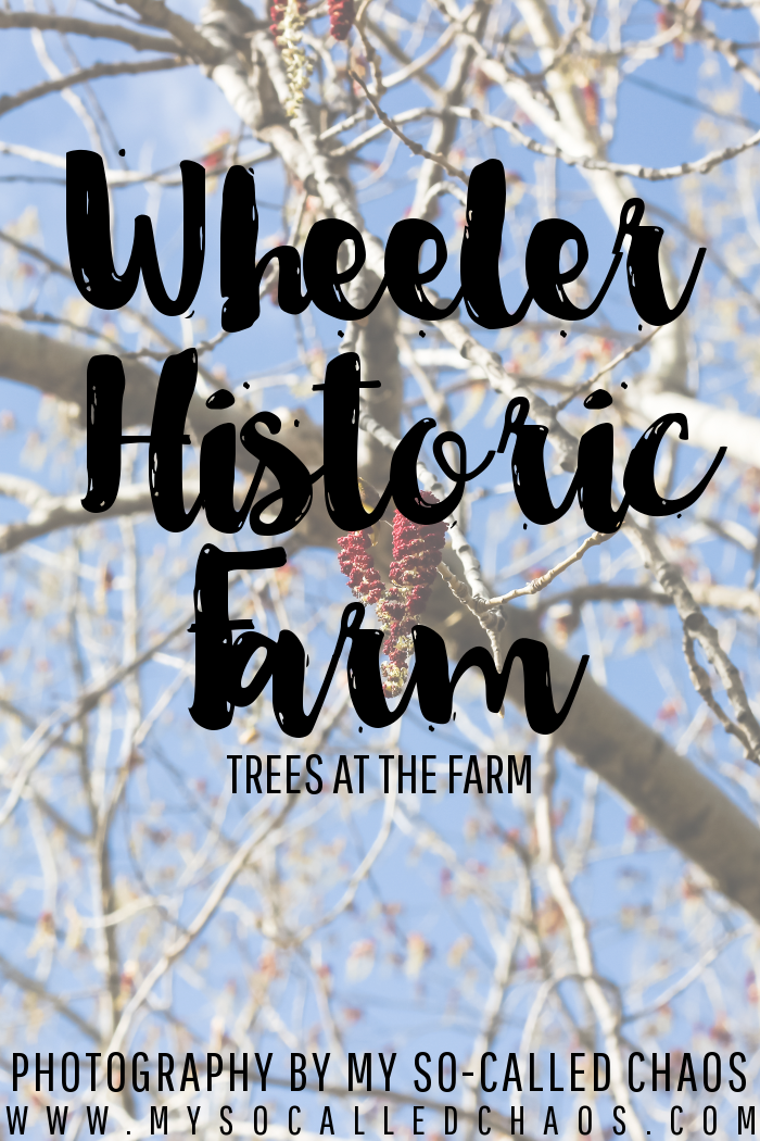 Trees at Wheeler Historic Farm