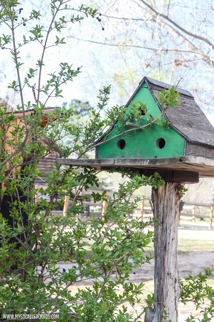 Birdhouse at Wheeler Farm, SLC UT