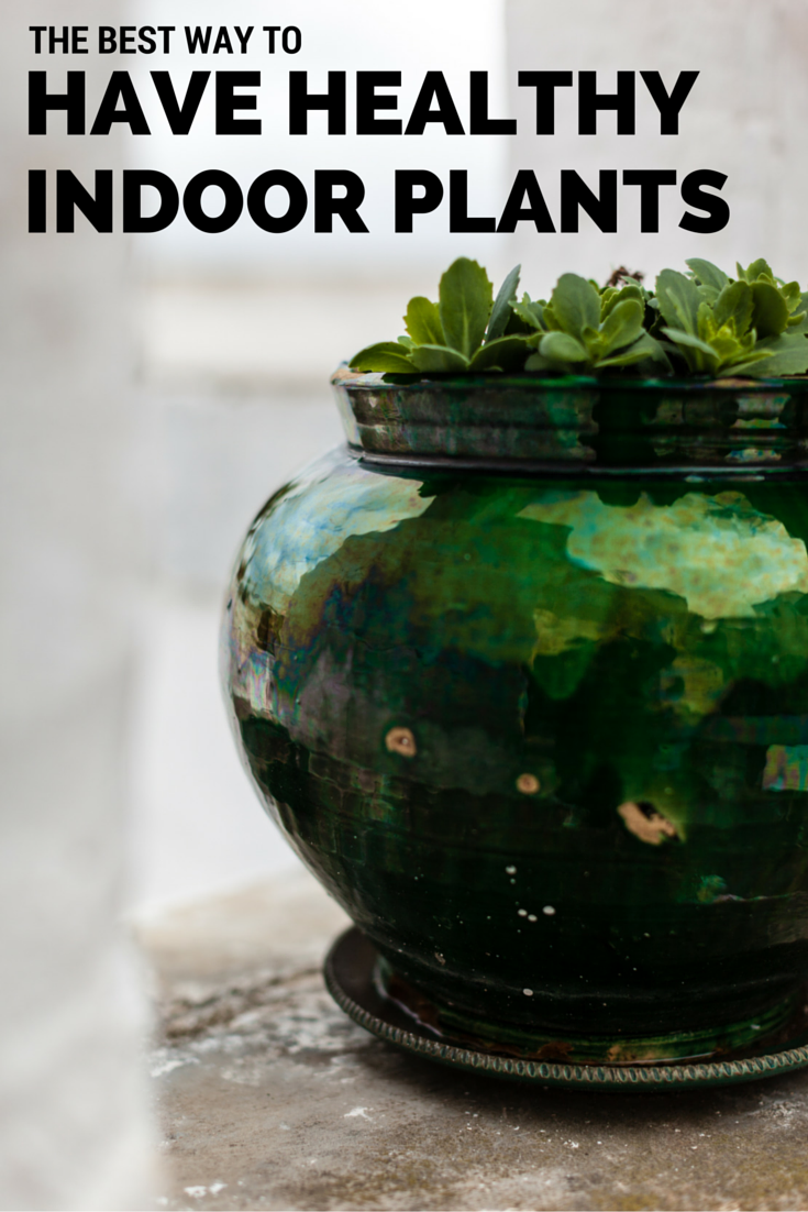The Best Way to Keep Indoor Plants Healthy