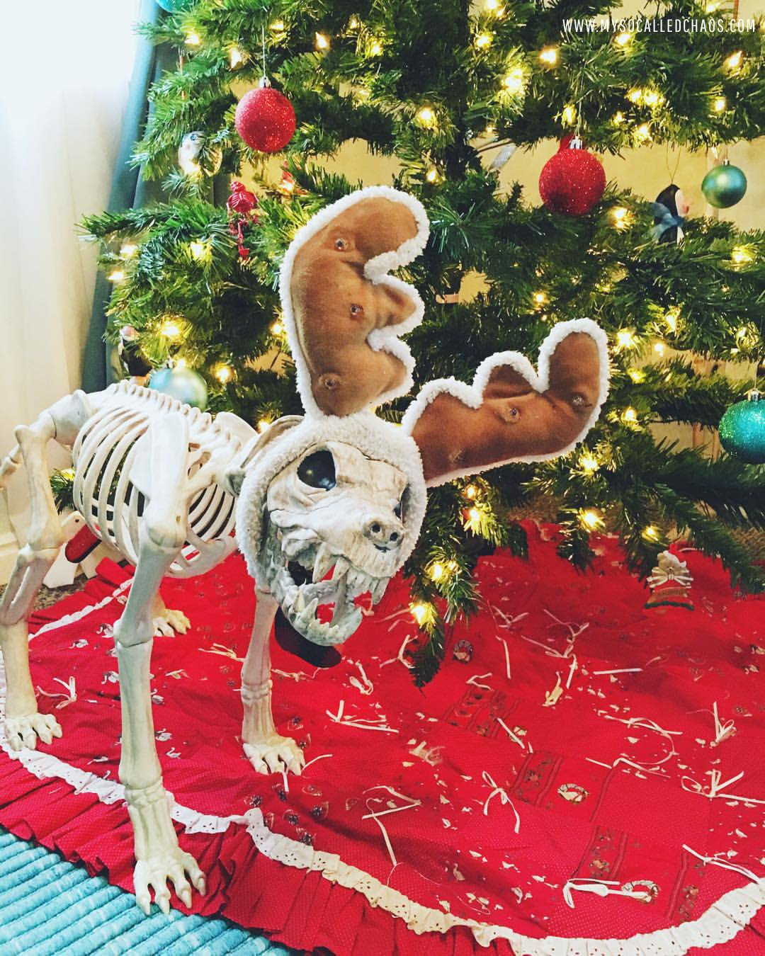 Skelly Dog getting into the Christmas spirit