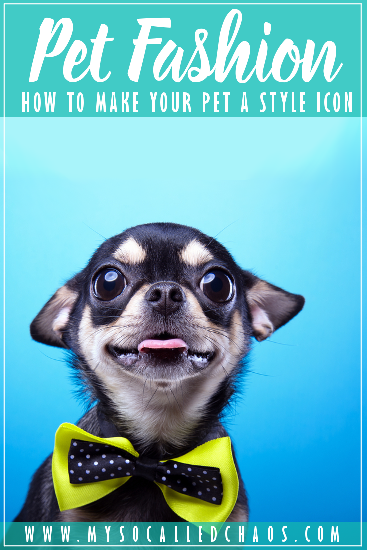 How To Make Your Pet a Style Icon