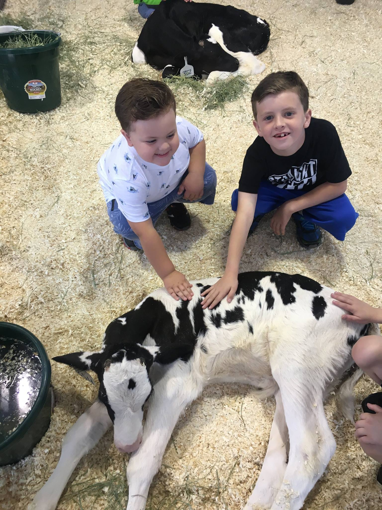 Petting Cows at the State Fair