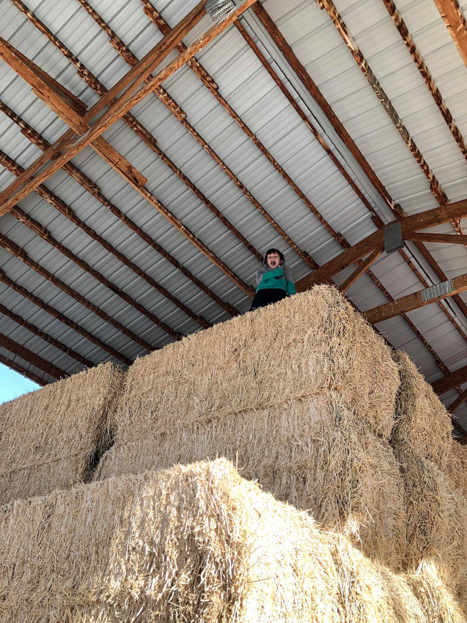 B, 9 years old, standing triumphantly on top of a tall haystack