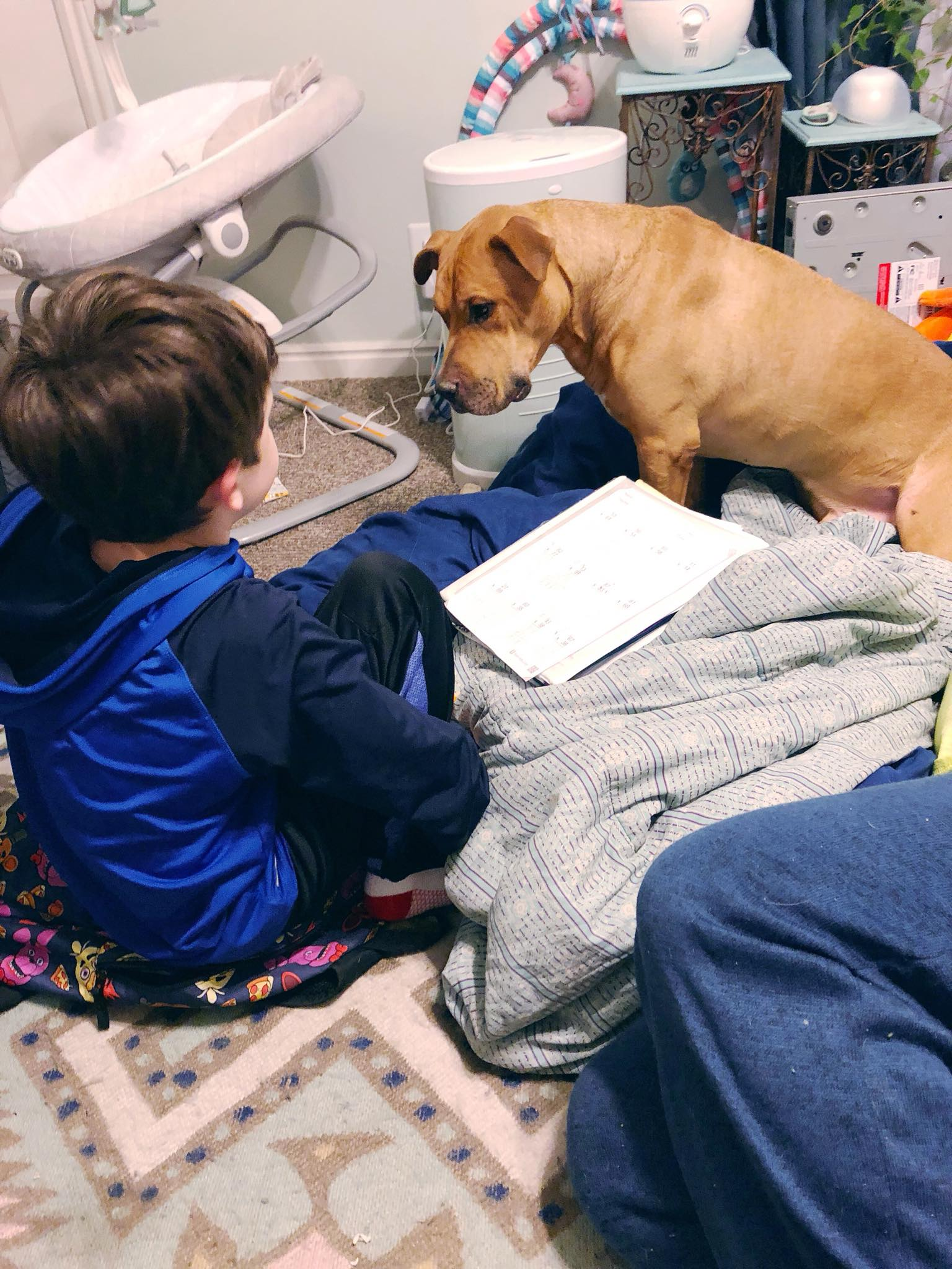 Tan pitbull staring intently at a 9 year old who's hiding food