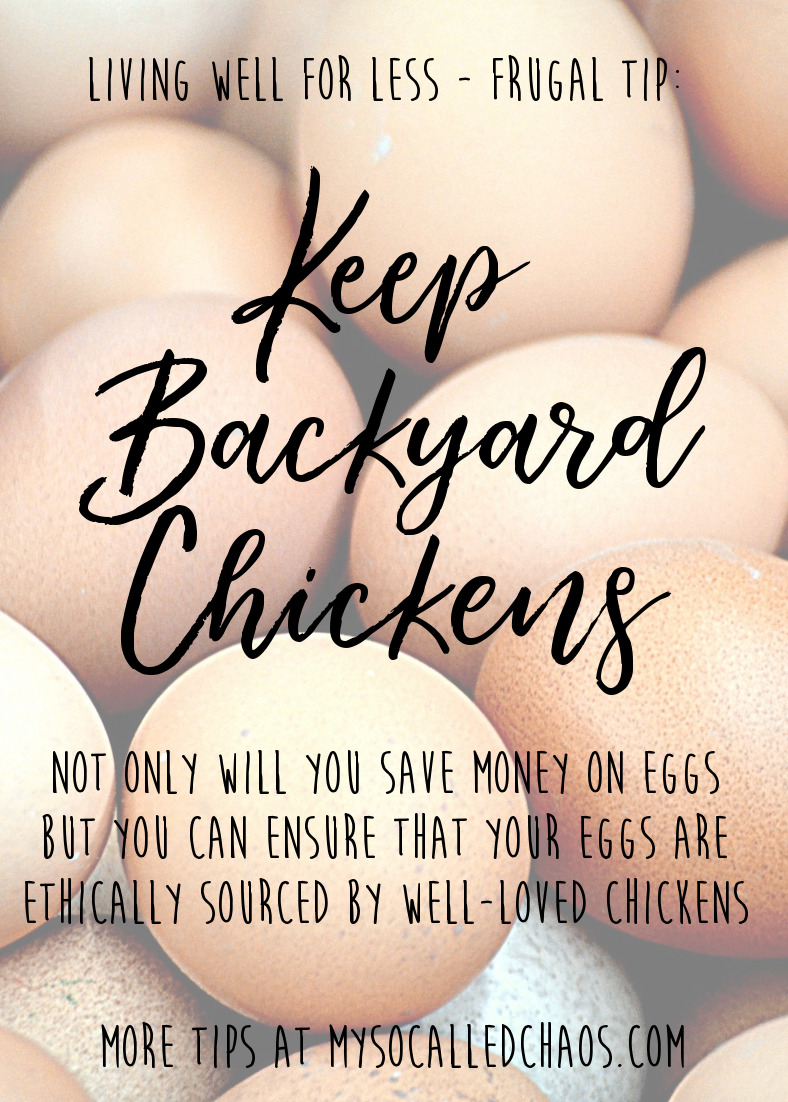 Living Well for Less Frugal Tip: Keep backyard chickens to keep your family in eggs and make sure your eggs are ethically raised by well-loved chickens. It's win-win!