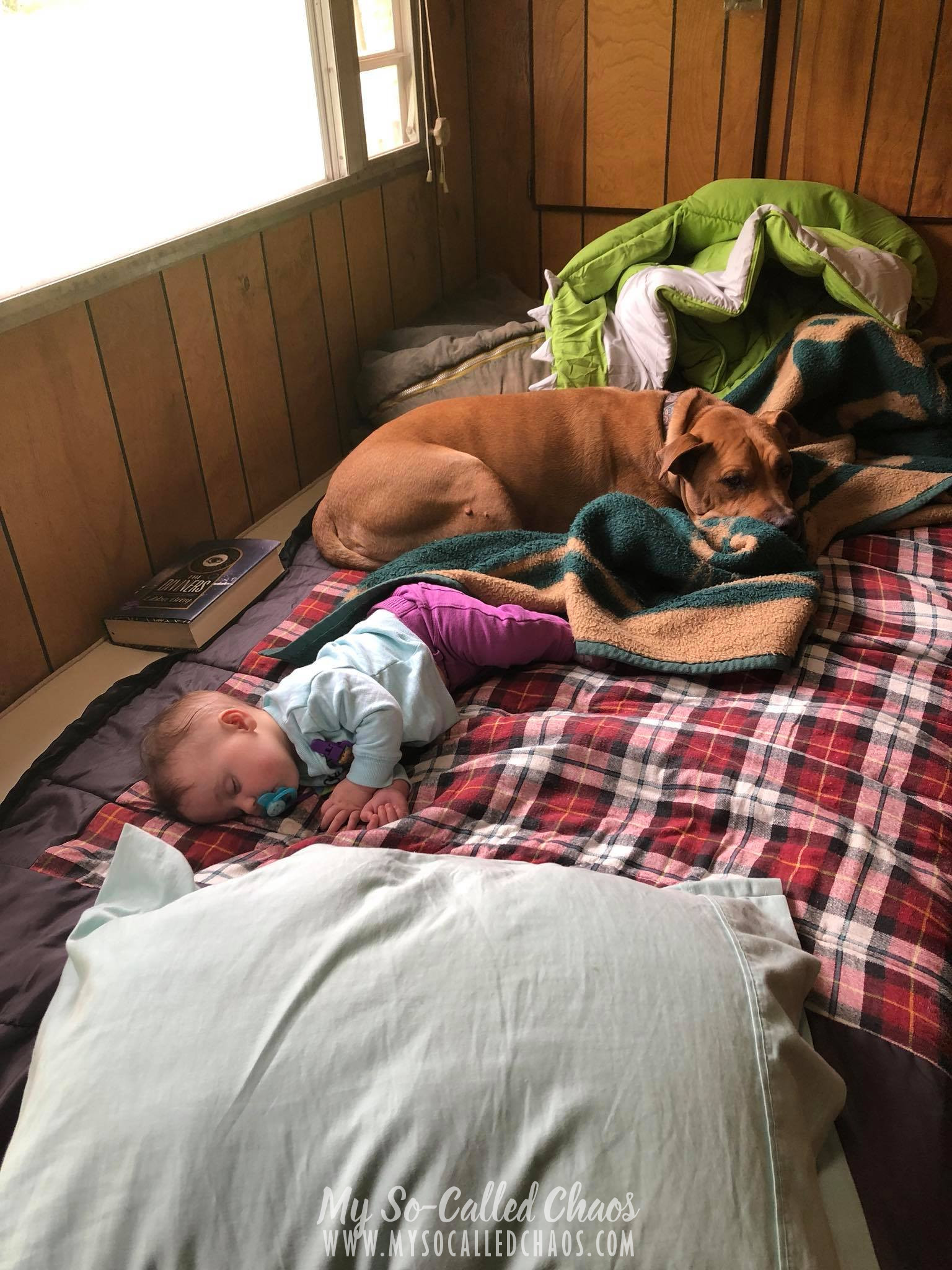 6 month old baby girl napping in a camping trailer with her trusty pitbull by her side.