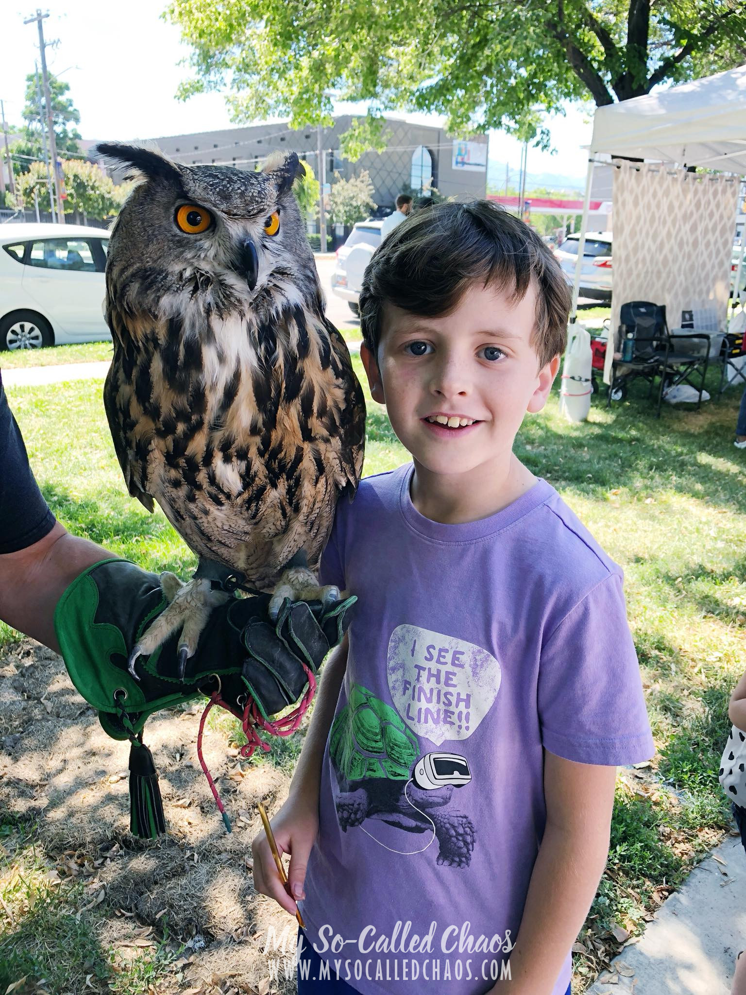 9 year old boy in a purple shirt standing next to an owl.