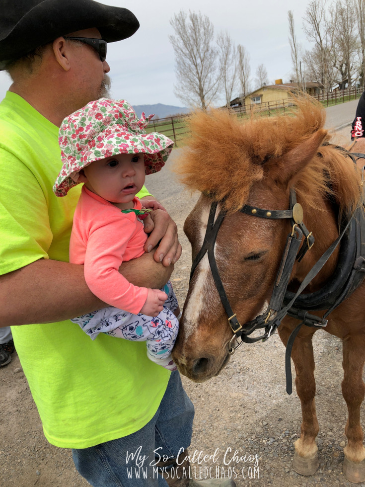 Baby girl wearing a flowered sunhat while her grandpa introduced her to a brown shetland pony
