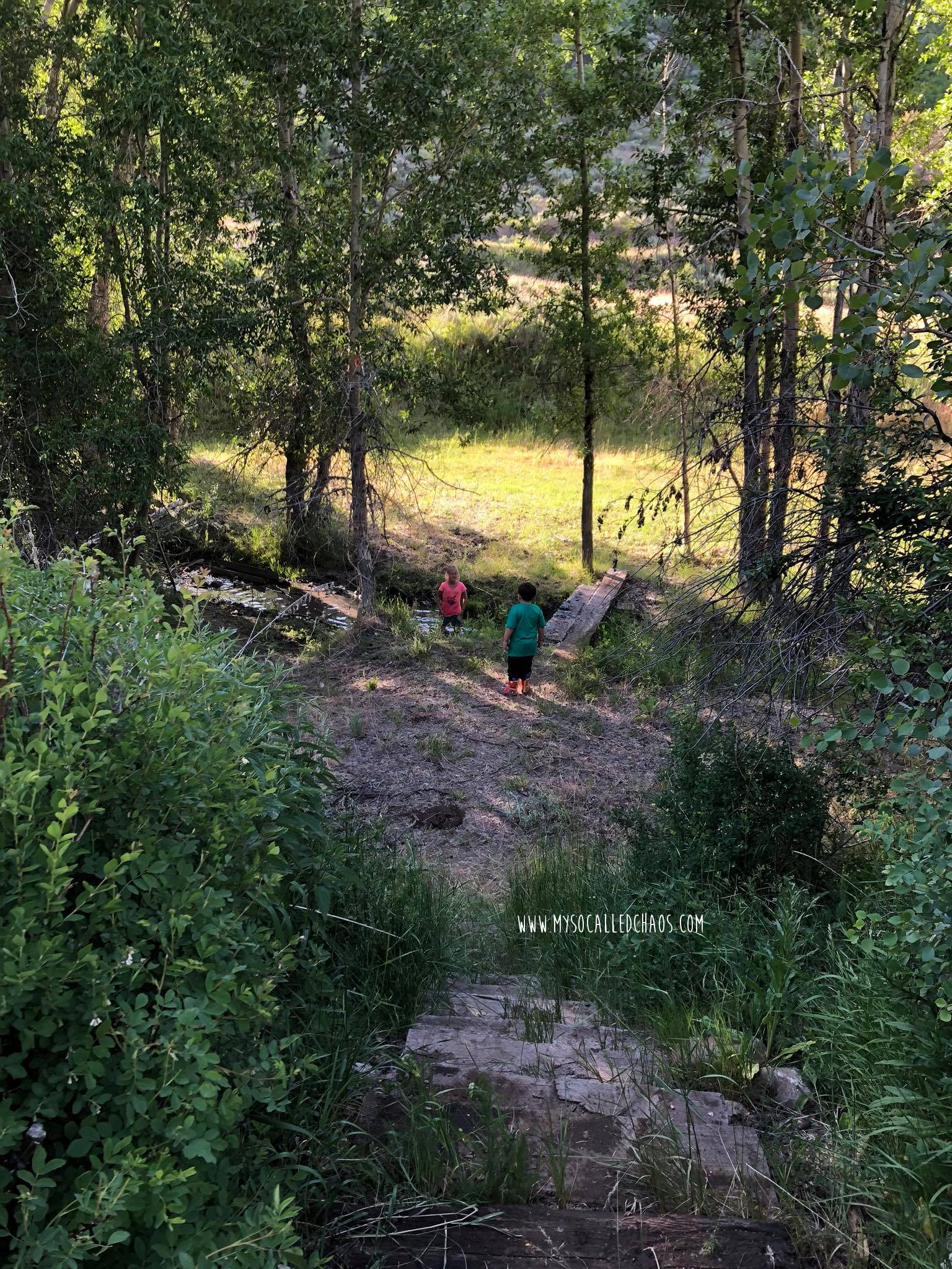 Kids playing in the creek up to my family Ranch in Summer of 2018.