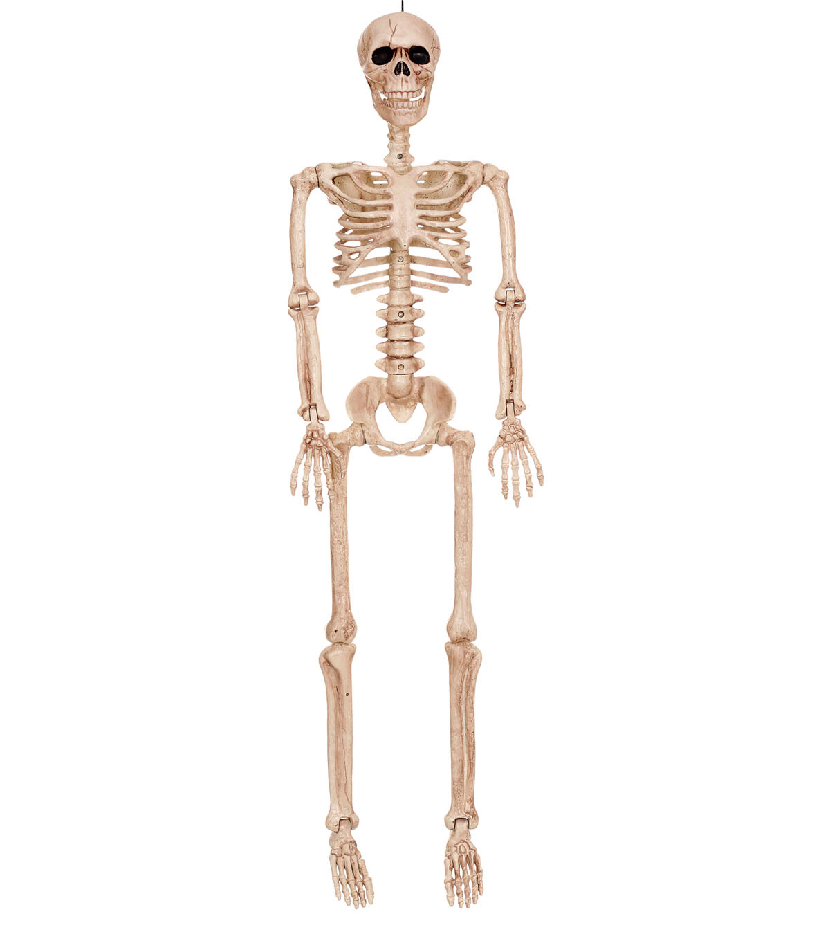 Poseable Skeleton Bones