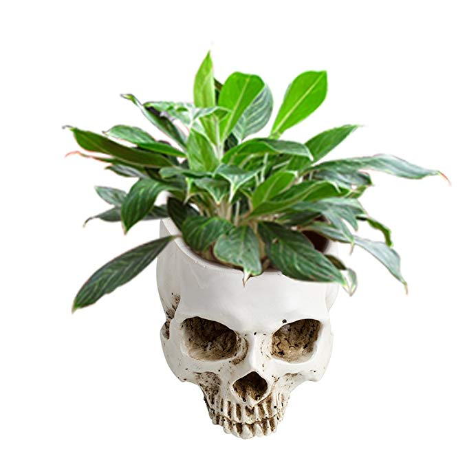 Human Skull Flower Pot with a green plant inside it