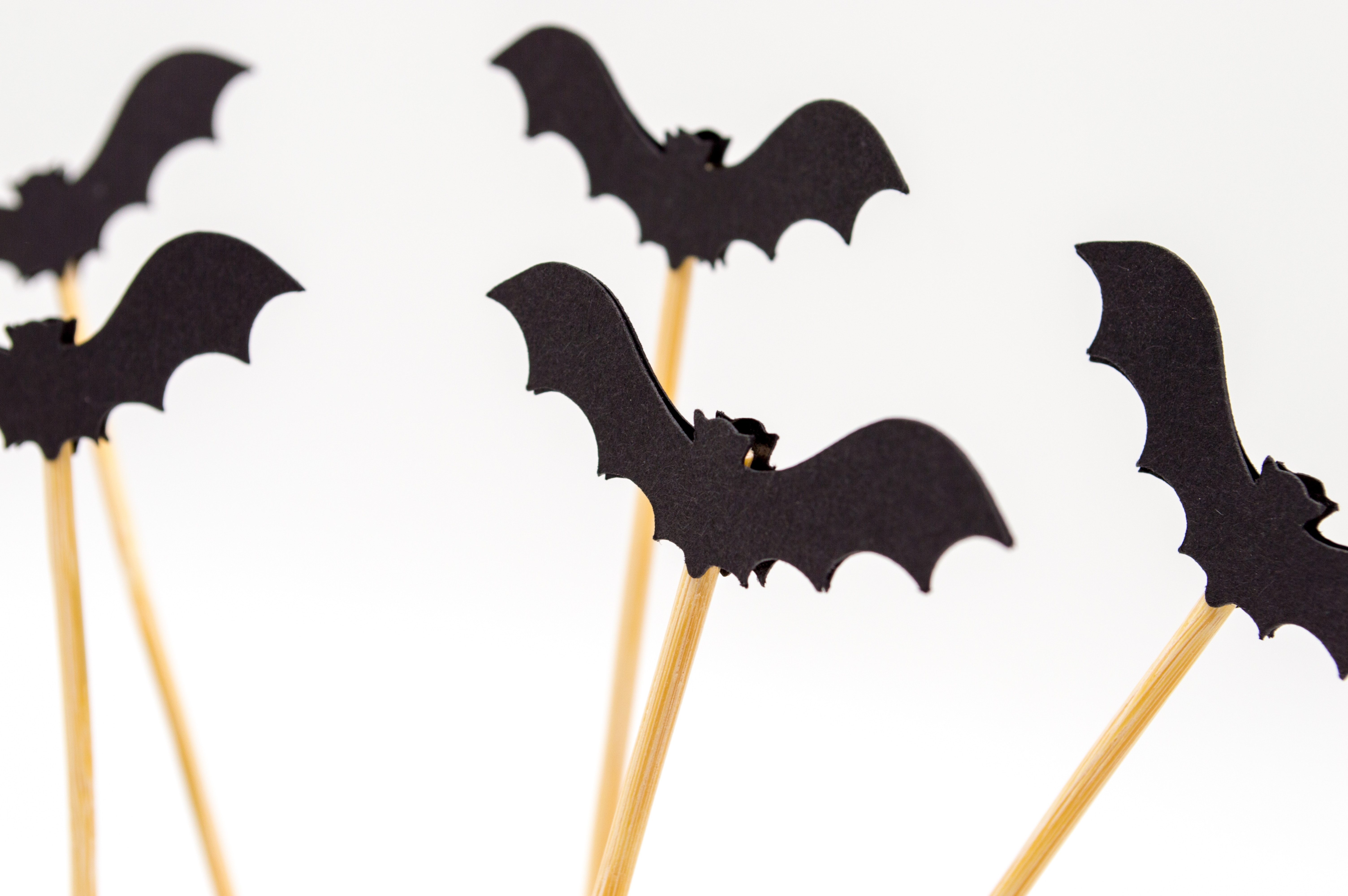 Bats on Sticks for Halloween party Favors - Photo by Mel Poole on Unsplash
